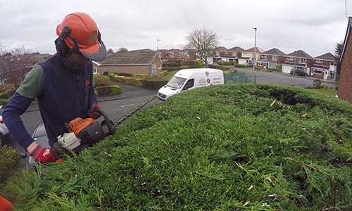 Photograph of hedging services in Chester