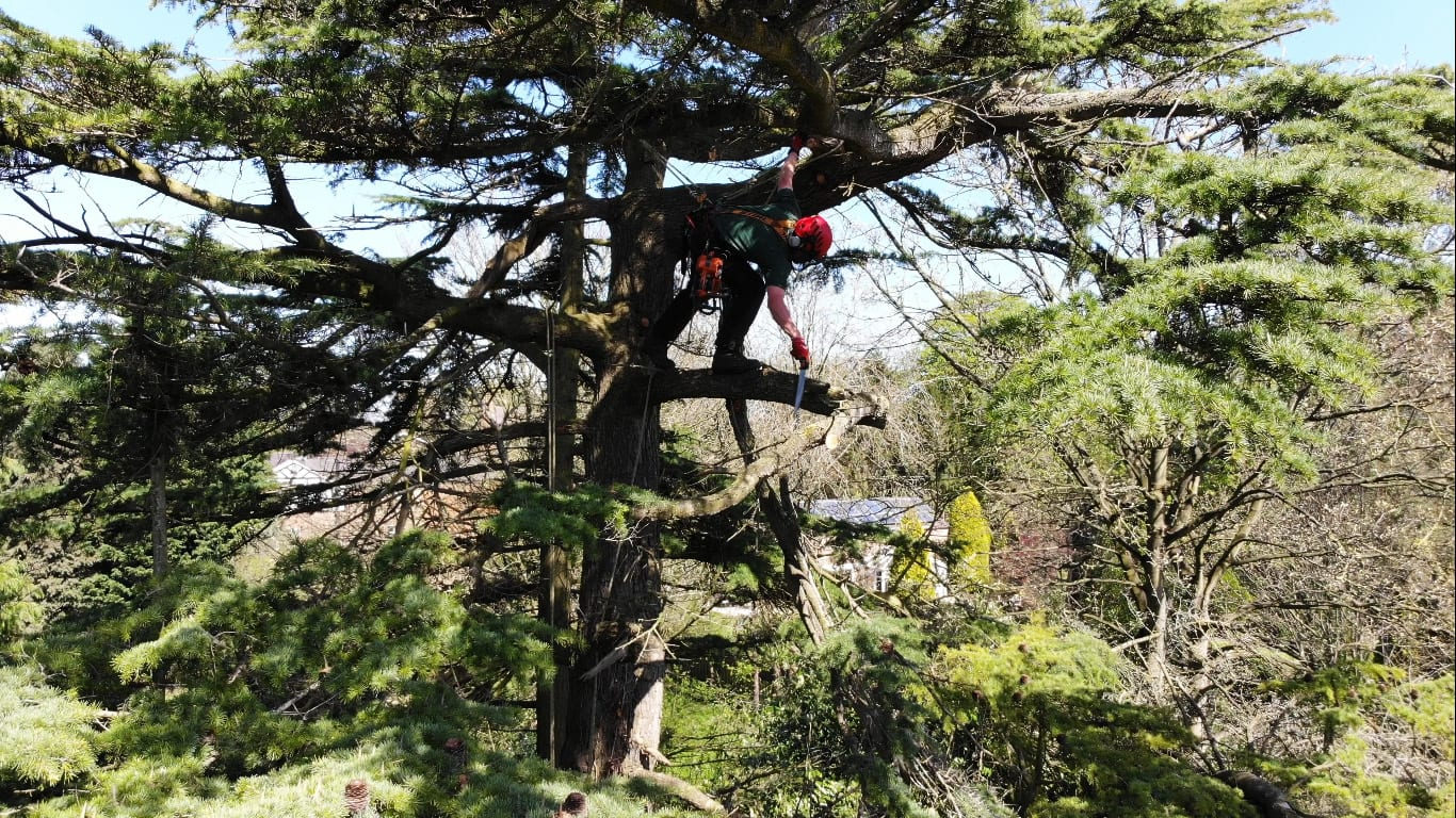 Tree Services Chester